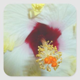 Hibiscus Yellow w Red center Stickers