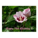 Hibiskus Hibiscus 50. Birthday anniversary Post Cards