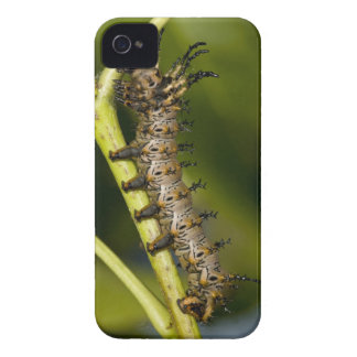 Hickory horned devil caterpillar (Citheronia iPhone 4 Cover