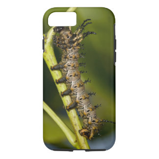 Hickory horned devil caterpillar (Citheronia iPhone 8/7 Case