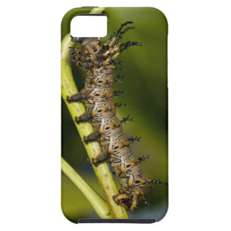 Hickory horned devil caterpillar (Citheronia iPhone SE/5/5s Case