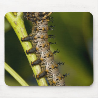 Hickory horned devil caterpillar (Citheronia Mouse Pad