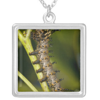 Hickory horned devil caterpillar (Citheronia Square Pendant Necklace