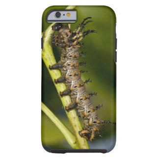 Hickory horned devil caterpillar (Citheronia Tough iPhone 6 Case