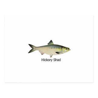 Hickory Shad Postcard