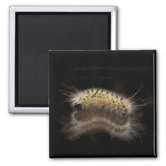 Hickory Tussock Caterpillar 2 Inch Square Magnet