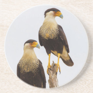 Hidalgo County. Adult Crested Caracara Drink Coaster