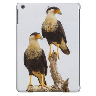 Hidalgo County. Adult Crested Caracara iPad Air Cover