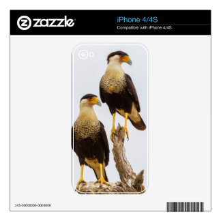 Hidalgo County. Adult Crested Caracara Decals For iPhone 4S