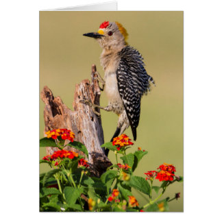 Hidalgo County, Texas. Golden-fronted Woodpecker 2 Card