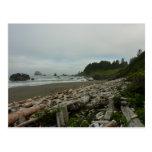 Hidden Beach I at Redwood National Park Postcard