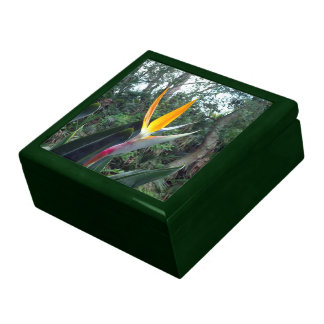 Hidden Beauty Jewelry Boxes