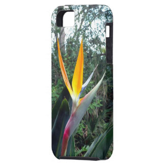 Hidden Beauty iPhone SE/5/5s Case