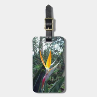 Hidden Beauty Luggage Tag