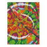 Hidden Chameleon Postcard