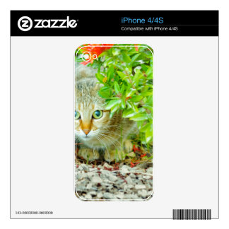 Hidden Domestic Cat with Alert Expression Decal For iPhone 4