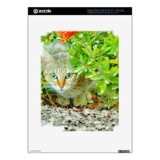 Hidden Domestic Cat with Alert Expression iPad 3 Skin