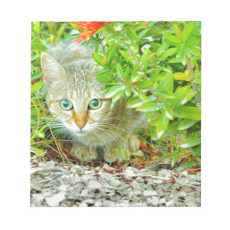 Hidden Domestic Cat with Alert Expression Notepad