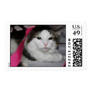 Hidden Kitty Postage Stamp