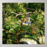 Hidden Waterfall Posters