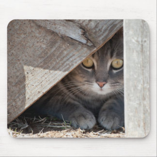 hide-a-kitty mouse pad