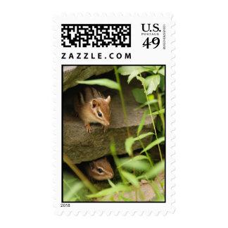 hide and seek baby chipmunks postage