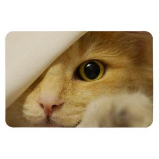 Hide and Seek Kitten under Blanket Magnet
