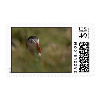 Hide and Seek Puffin Postage Stamp