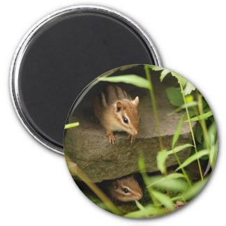 Hide & Seek Baby Chipmunk Siblings Magnet