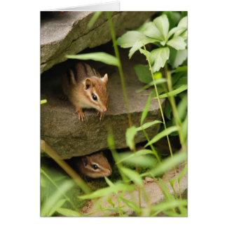 Hide & Seek Baby Chipmunks Greeting Card