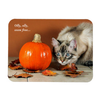 Hide & Seek Siamese Cat with Pumpkin Funny Magnet