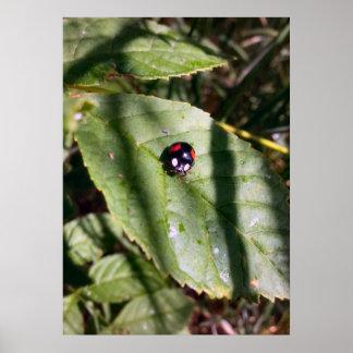 Hiding Beetle Poster