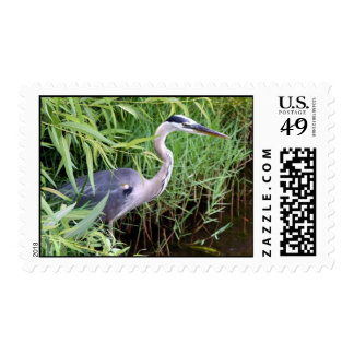 Hiding Blue Stamps