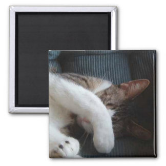 Hiding Cat Magnet