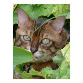 Hiding in the Garden Postcard