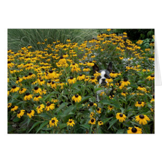 Hiding in the Rudbeckia - Lola B. Boston Card