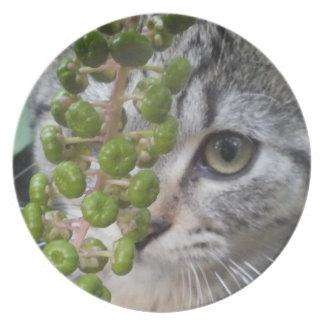 Hiding Kitten Collector Plate