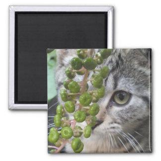 Hiding Kitten Magnet