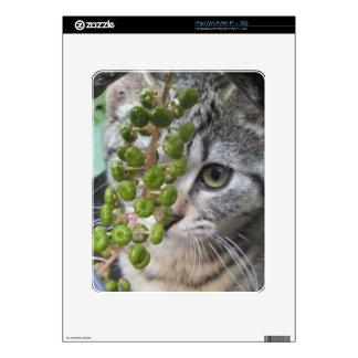 Hiding Kitten Skin For iPad