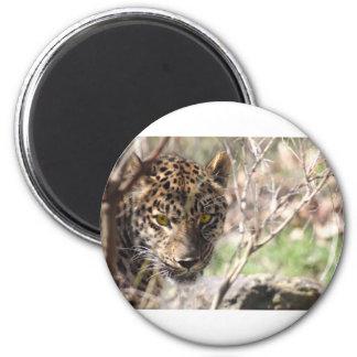 Hiding Leopard 2 Inch Round Magnet