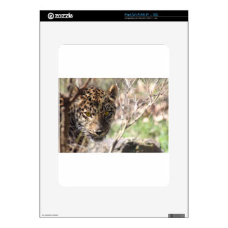 Hiding Leopard Decal For iPad