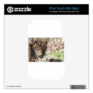 Hiding Leopard iPod Touch 4G Decal