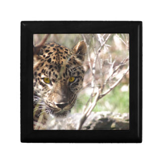 Hiding Leopard Jewelry Box