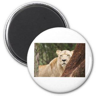 Hiding Lioness 2 Inch Round Magnet