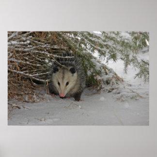 Hiding Possum Poster
