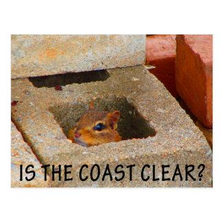 Hiding Squirrel Postcard