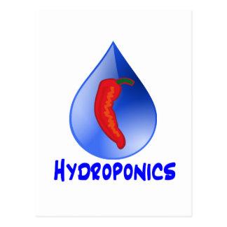 Hidrocultivo, pimienta de chile, diseño azul del tarjeta postal