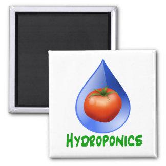 Hidrocultivo-Tomate, texto verde, descenso azul Imán Cuadrado