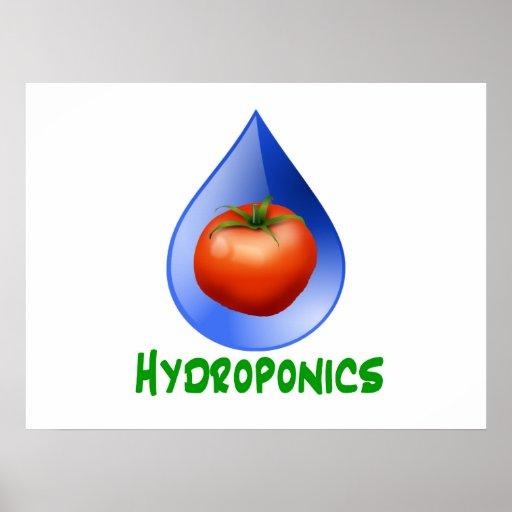 Hidrocultivo-Tomate, texto verde, descenso azul Impresiones