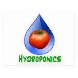 Hidrocultivo-Tomate, texto verde, descenso azul Tarjeta Postal